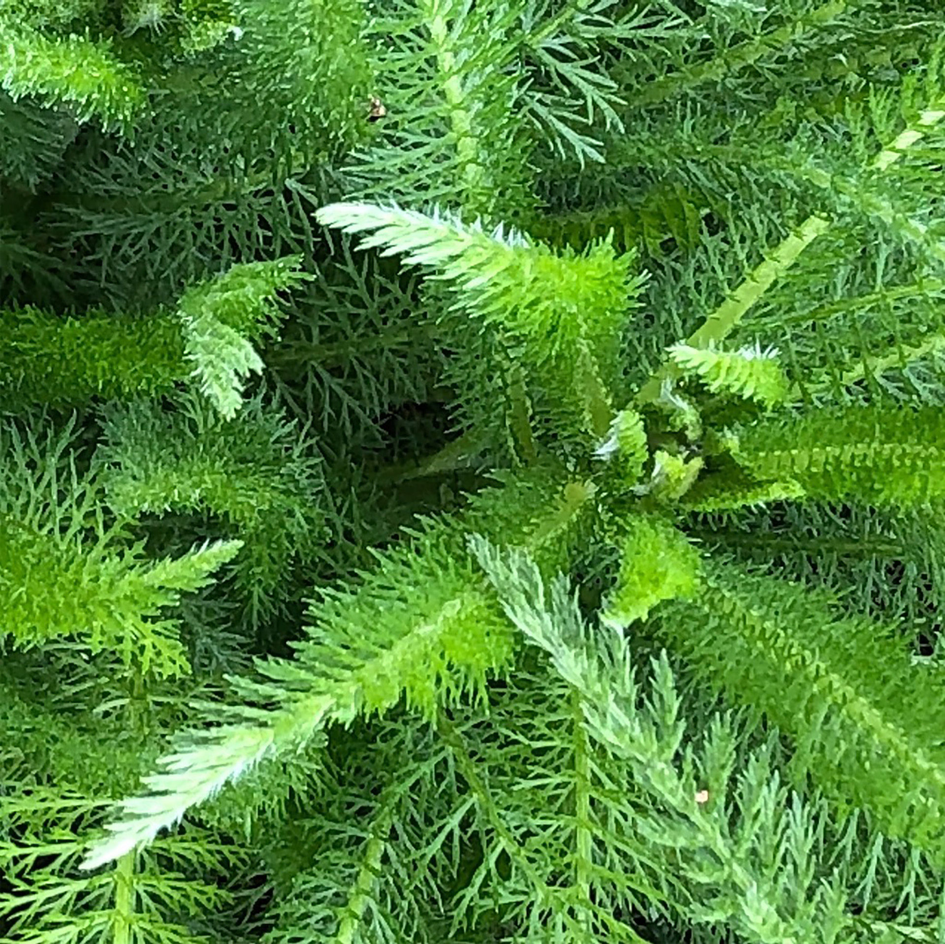 beautiful green fern from above; trauma healing